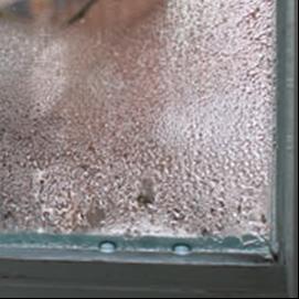 NewPro NC Flex Antifog Reinigungsmittel und Schutz